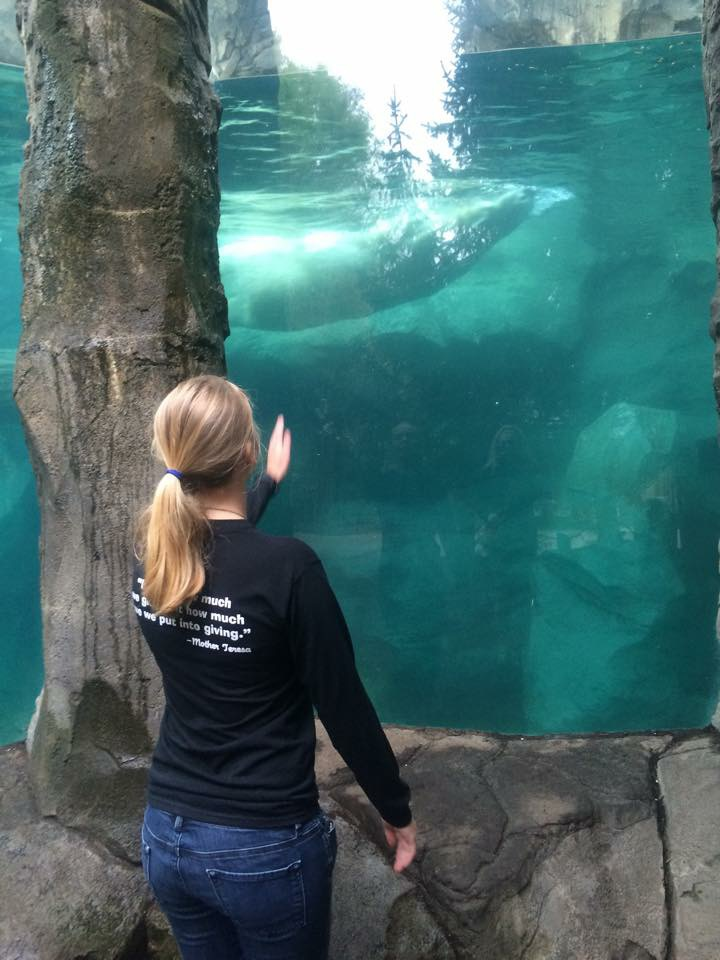 Sara '15 stops to admire the polar bear