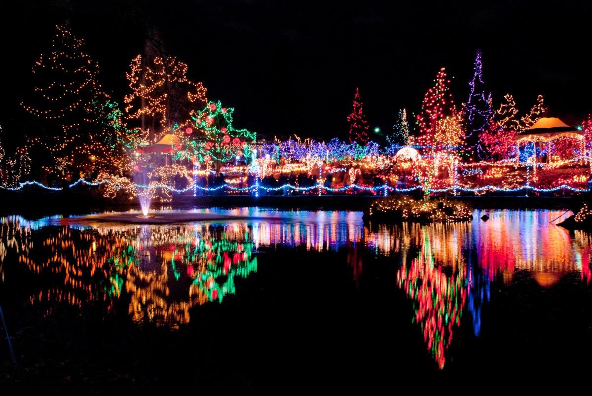Zoo Festival Lights
